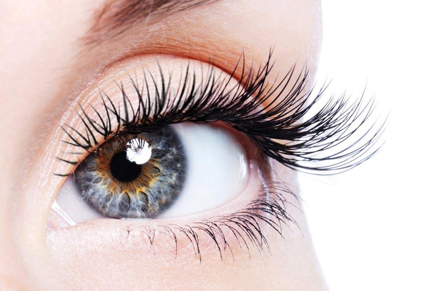 Budowa oka – anatomia