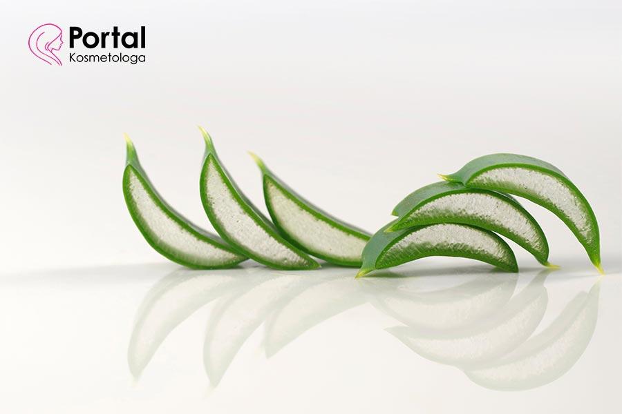 Aloes - właściwości kosmetyczne