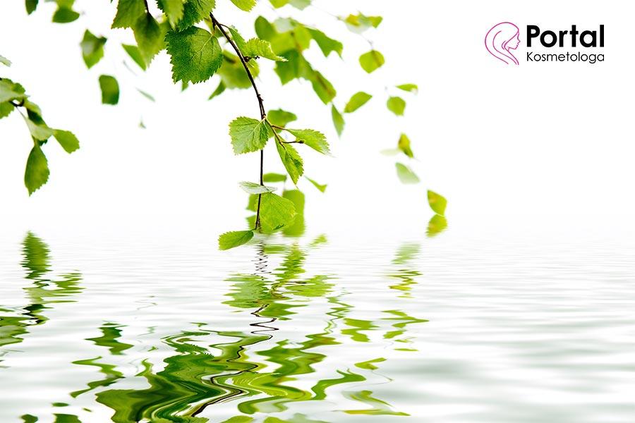 Woda brzozowa - jak wpływa na naszą urodę?
