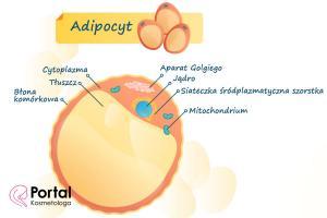 Tkanka tłuszczowa (adipocyt)